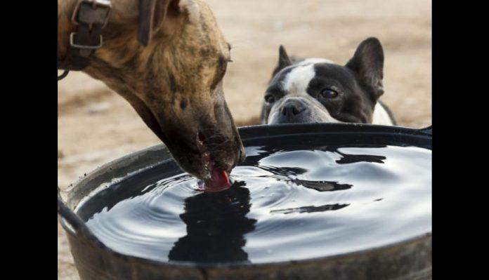 Golpe de calor se produce cuando se exige a las mascotas a actividades que generan calor corporal, en un lugar no tan ventilado o con un calor excesivo (época de verano) y no se tiene la debida hidratación.