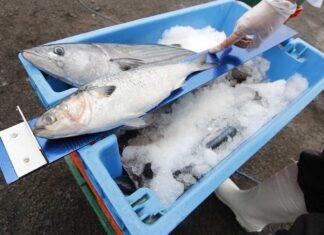 Pesca ilegal en Perú.